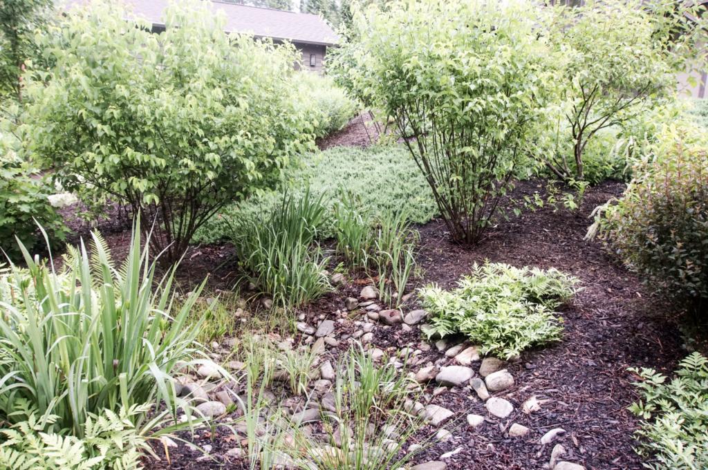 Native grasses, perennials, bushes, and trees make up a rain garden